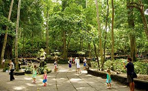 Forest Area In Bali To Visit Beutiful Hidden Tourist Spots