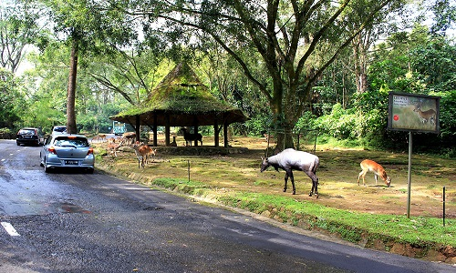 Things to Do in Indonesian Safari Park Cisarua Bogor : Cool Locations of a Cool City