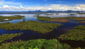 Lake Sentarum, West Kalimantan, Indonesia