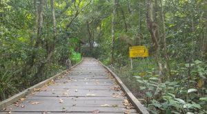Ketapang City Forest