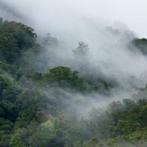 Kayan Mentarang National Park Vegetations