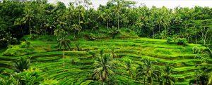 Subak Bali Cultural Landscape