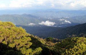 Mount Palung National Park