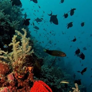 Taka Bonerate Marine Life
