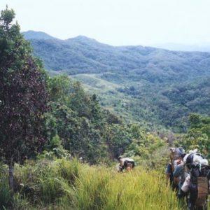 Kayan Mentarang National Park Jungle Trekking