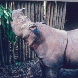 Rhino Camp