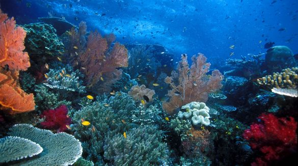 Marine Tourism in South East Sulawesi