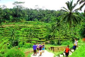 Rice terrace trekking