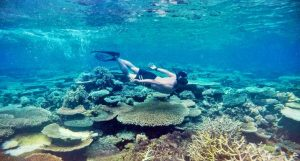 Diving in Togean Island