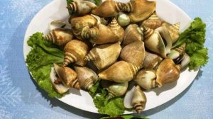 Gong Gong Snail