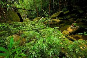 The shady trees in Gunung Palung National Park