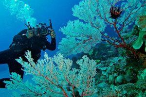 Diving in Takabonerate Marine Park
