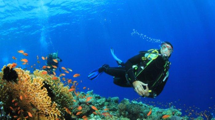 Beautiful Underwater Scenery of Raja Ampat