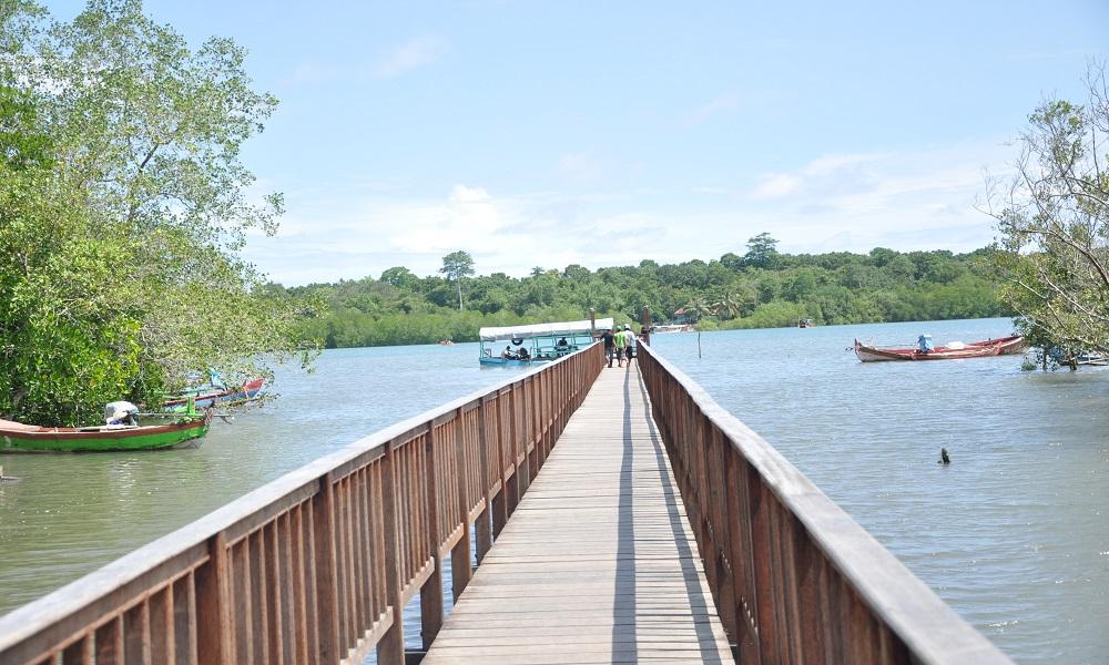 Mangrove Bedul