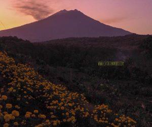 Asmoro Peak, Banyuwangi