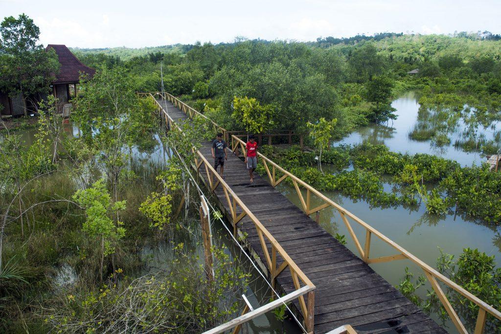 Mangrove Kampung Laut Cilacap
