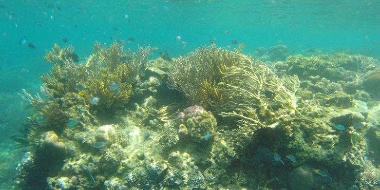 Pulau Manjarite