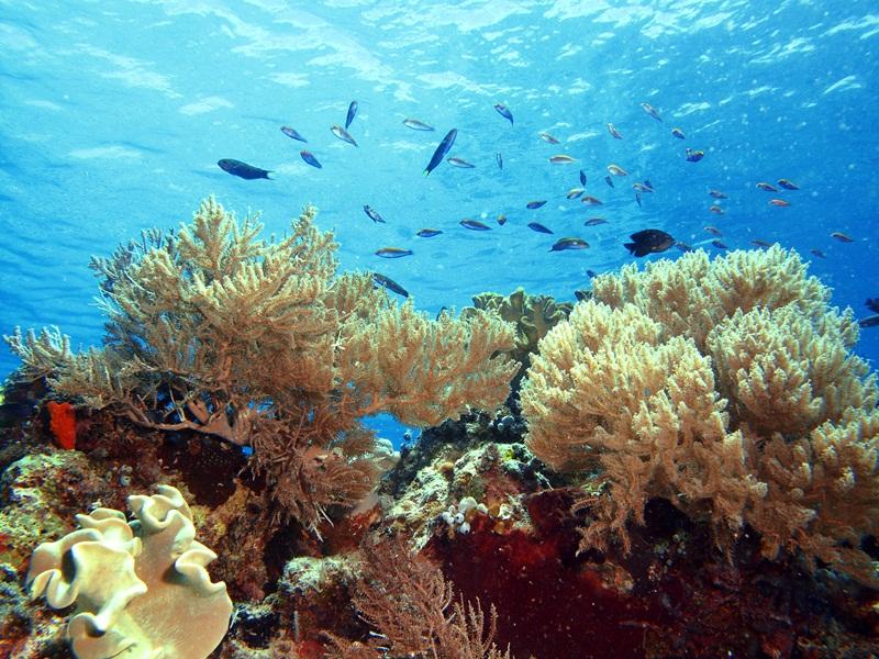 Taman Laut Teluk Maumere