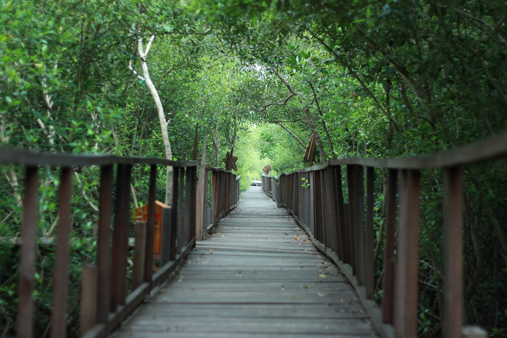 Mangrove Ujungpangkah