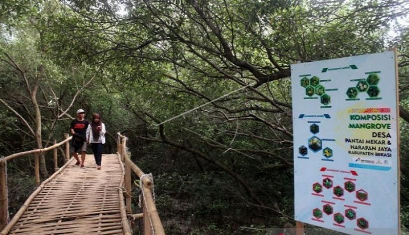 Mangrove Muara Gembong Bekasi