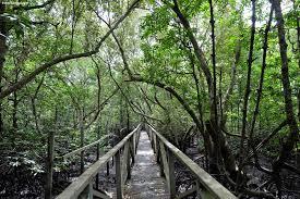 Mangrove Margomulyo Balikpapan