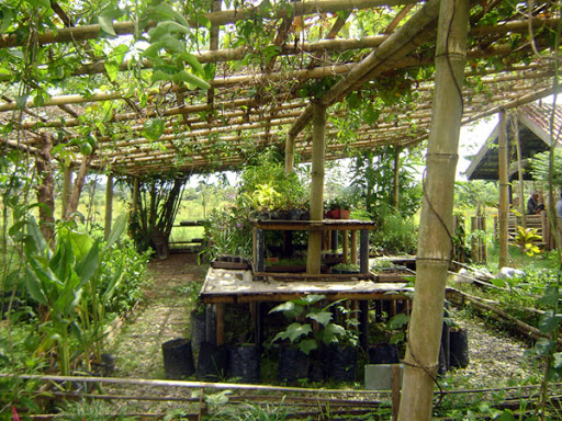 Eco Farm in Bukit Lawang