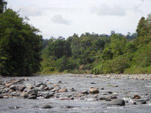 Mount Gedang