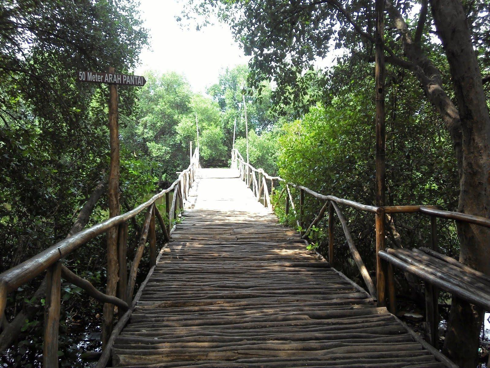 Mojo Mangrove Forest