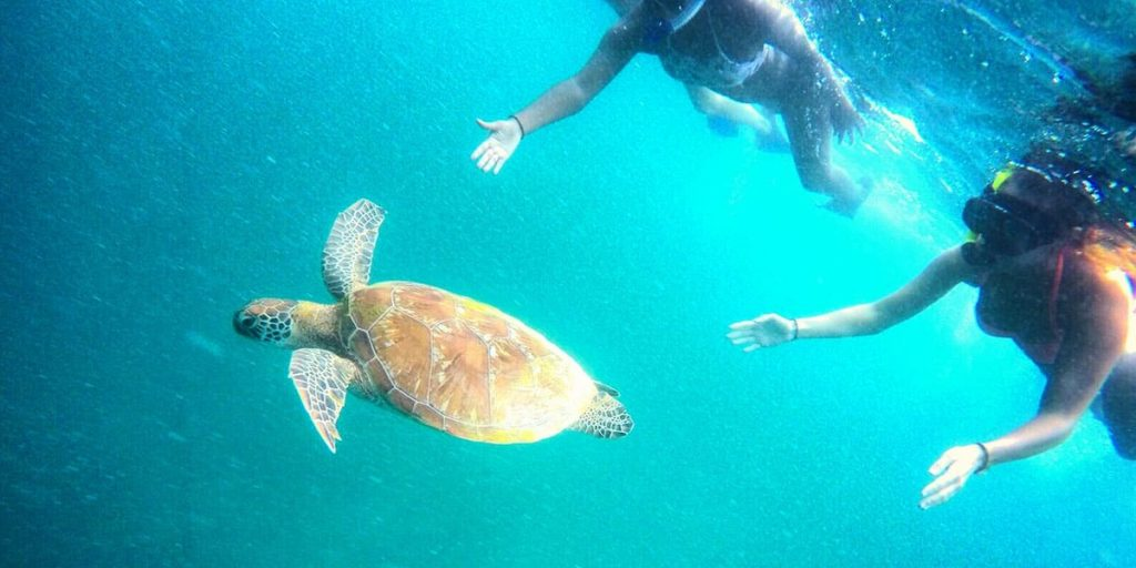 Playing with Sea Turtle