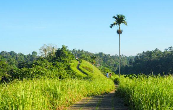 hiking spot in ubud