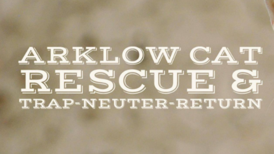 Arklow cat rescue wicklow
