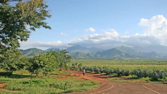 Mt uluguru and sisal plantations