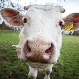 Cover photo for Livestock Indemnity Program