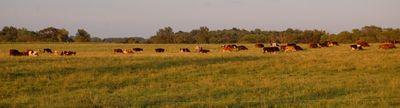 Cover photo for Minnesota AGRI Livestock Investment Grant