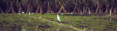 Cover photo for Bird Returns