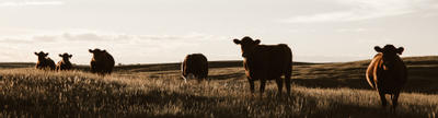 Cover photo for Colorado Agriculture And Development Authority Beginning Farmer Loan Program