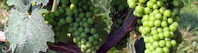 Cover photo for Kentucky Grape and Wine Council Wholesaler Reimbursement Program