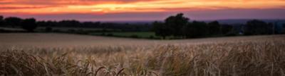 Cover photo for Minnesota Beginning Farmer Tax Credit