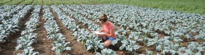 Cover photo for Northeast SARE Research for Novel Approaches in Sustainable Agriculture Grant Program