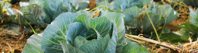 Cover photo for Oklahoma Specialty Crop Block Grant (H.R. 133 Funding)