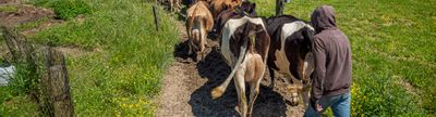 Cover photo for Southern Maryland Farmer Mini-Grant Program