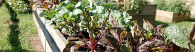 Cover photo for Urban Agriculture and Innovative Production Competitive Grants Program