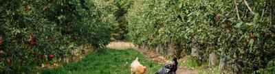 Cover photo for Whole Farm Revenue Protection