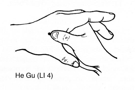 He-Gu-LI-41