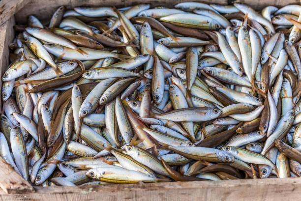 Wild Caught Oily Fish