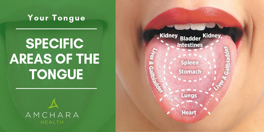 Specific Areas of the Tongue