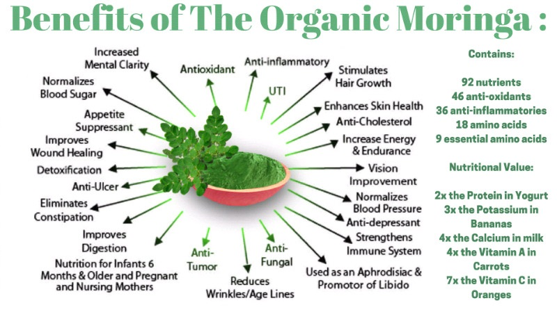 92 Nutrients & 46 Antioxidants In One Tree Moringa Oleifera800 x 449 jpeg 118kB