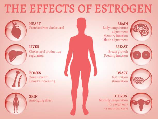 the-effects-of-oestrogen