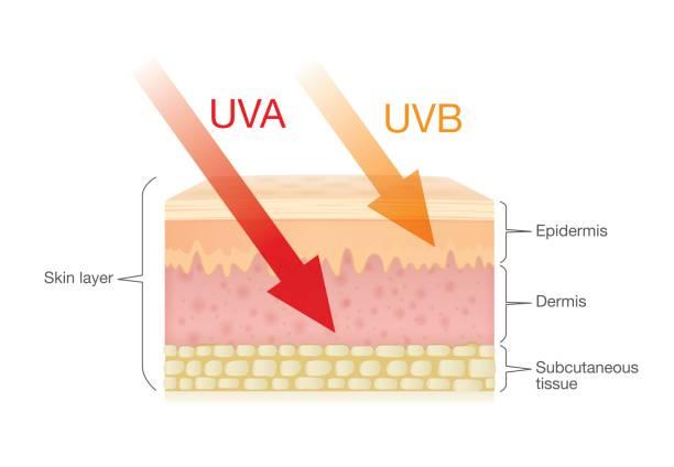 Skin Radiation UVA UVB image