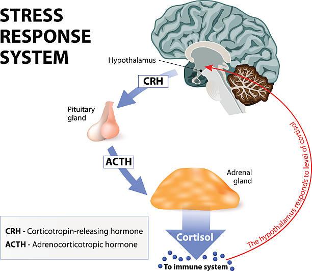 Stress-Response-System